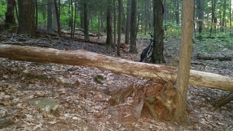 Tree fall that blocks trail. With some work this could be rideable.