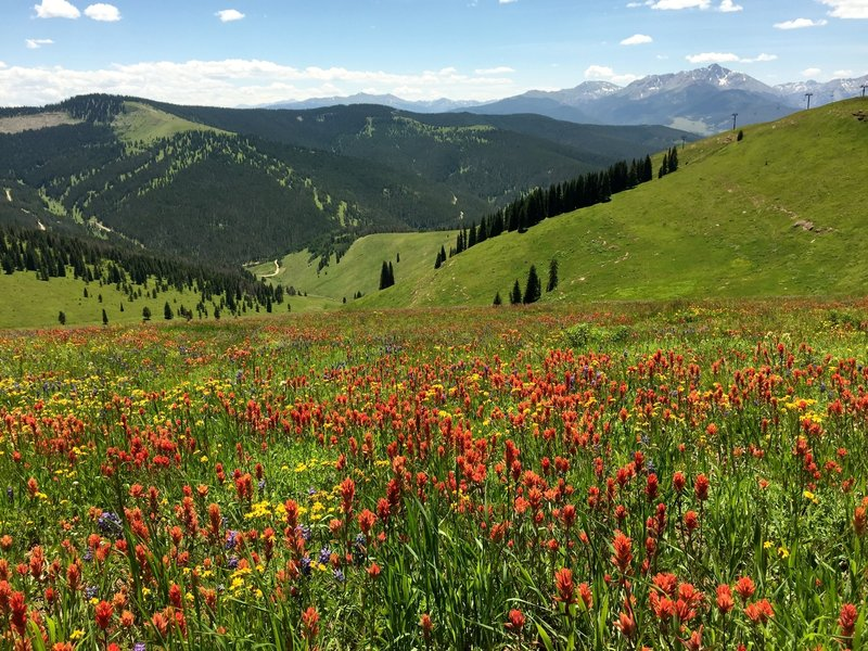 Many wildflowers still at end of July