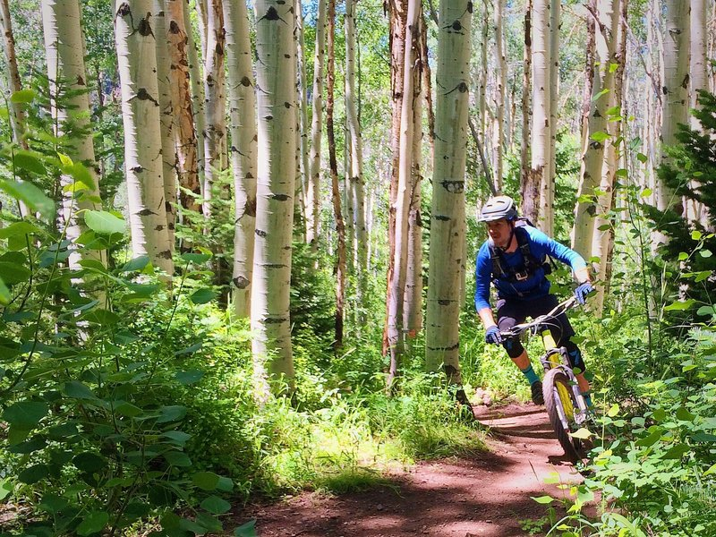 Making our way through the aspens of the Mid Mountain Trail.  Such a wide variety of riding on this trail!
