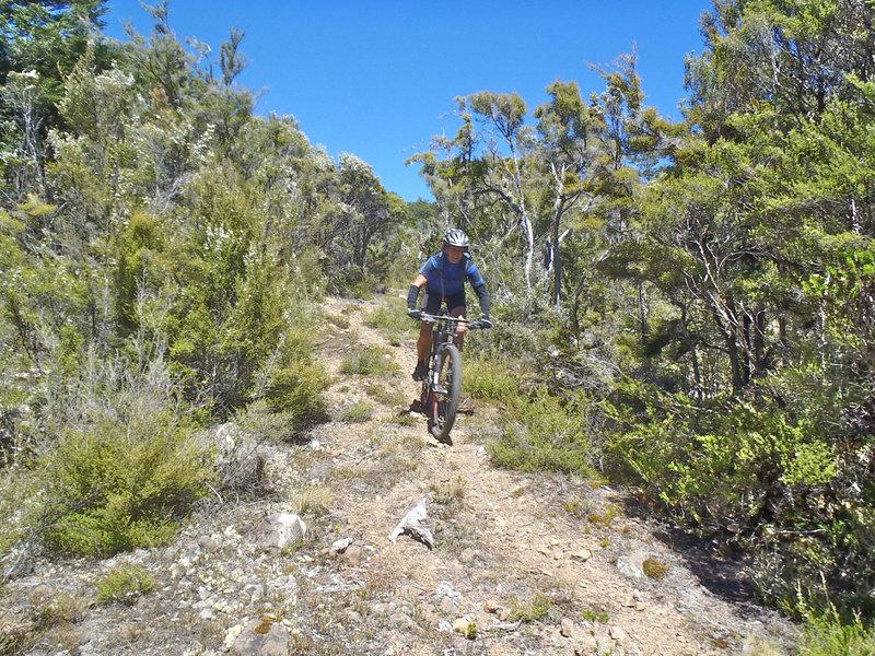 Riding through mineral belt scrub down to Red Hills Hut