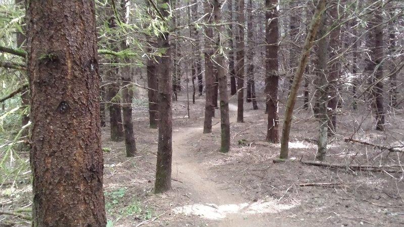 Simple but fun and flowing Shoofly Trail through western hemlock.