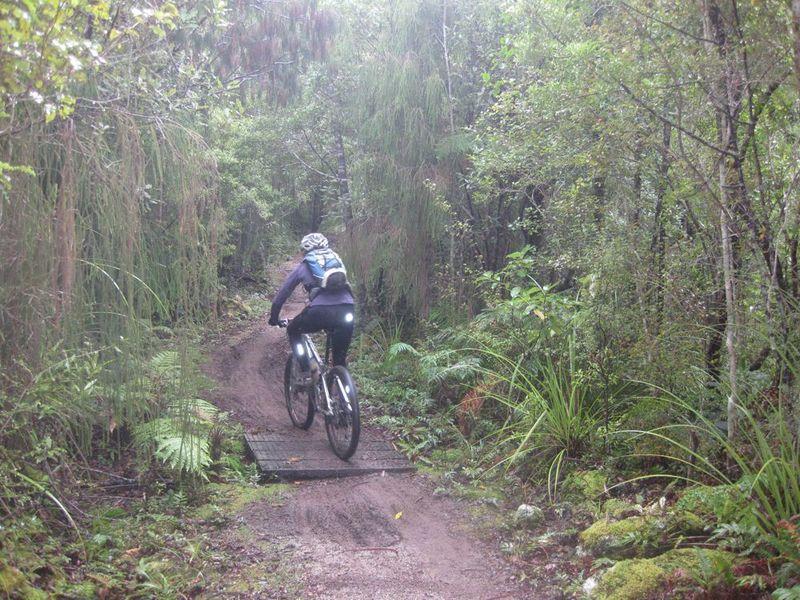 Climbing the track from Lewis Hut to Mackay Hut through verdant West Coast bush