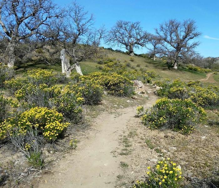 Mature oaks and wildflowers are plentiful