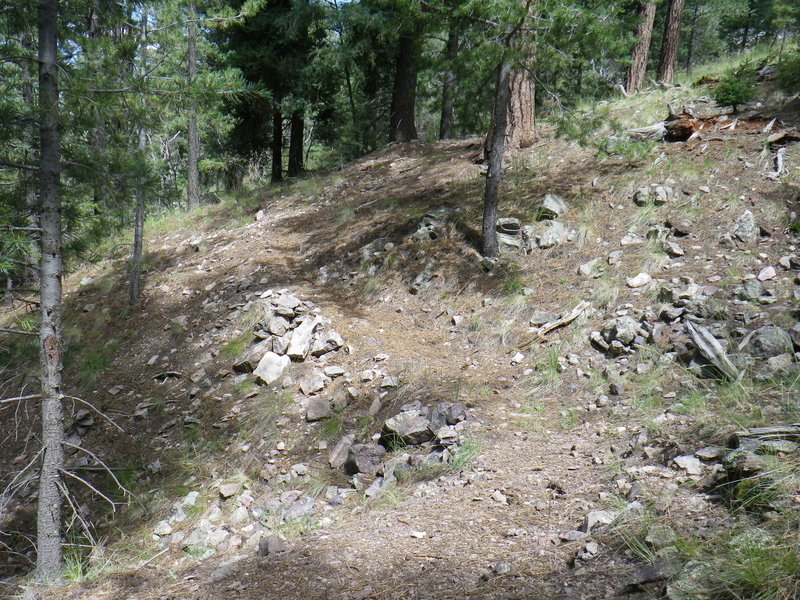 Typical upper section of Trail 25.