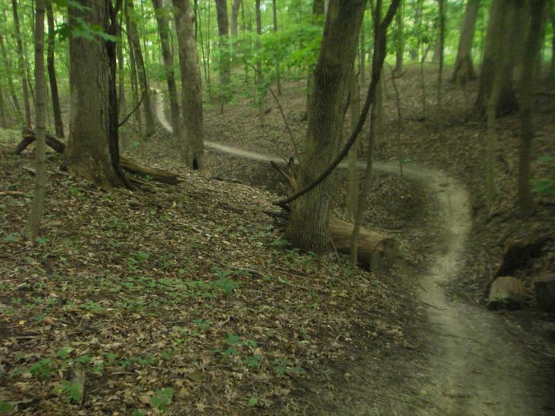 Swooping trails through Farmdale