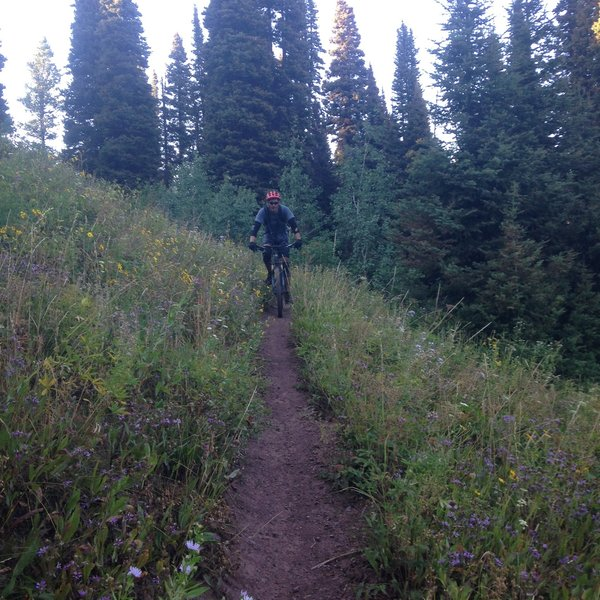Open meadows at start of Drake Creek descent