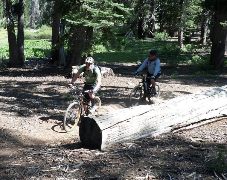 Cruisin' through the pines.