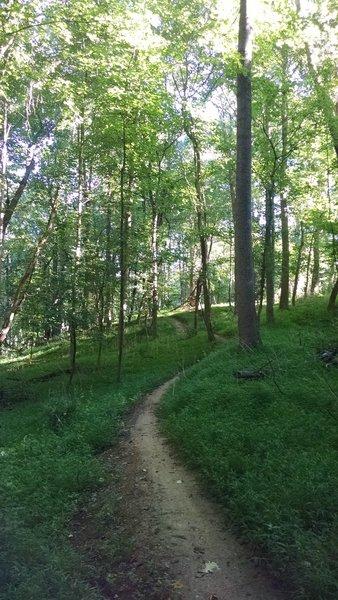 The Seneca Ridge Trail is more open here