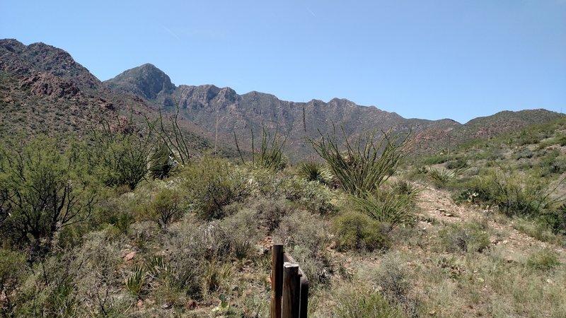 Newman Trail
