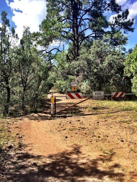 Trail #349 at Cayuse Trailhead