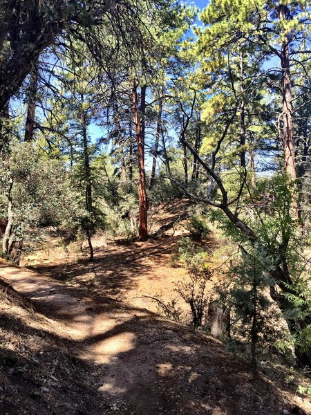 Dry conditions on Trail #349
