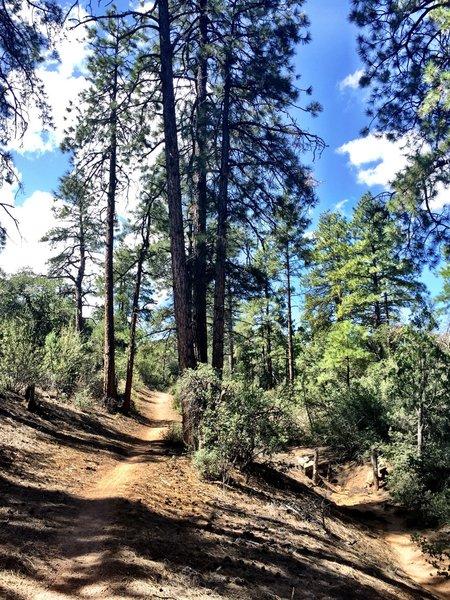 Trail #349 singletrack