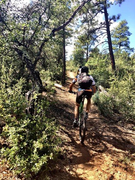Climbing up Trail #349