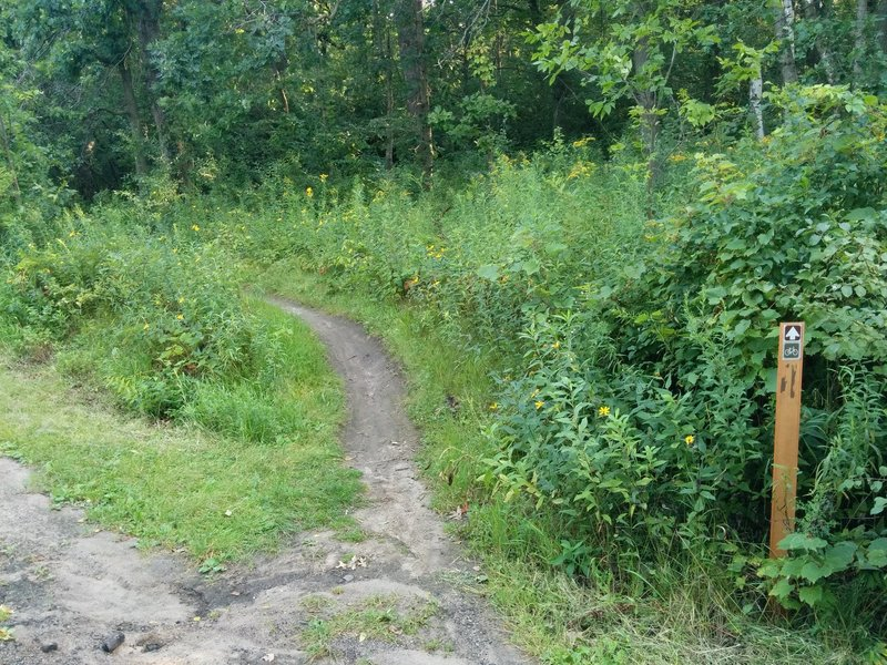 Connector Trail from Battle Creek Rd