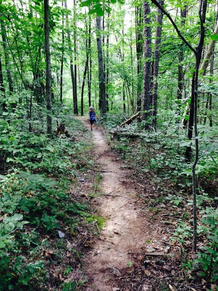 Trails in great shape 8/25/15