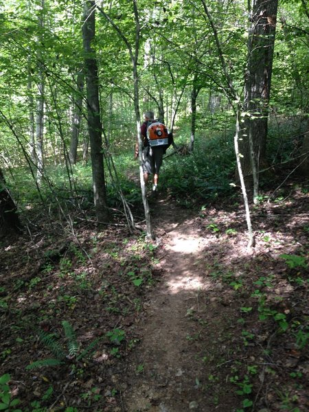 Volunteers use jetpack to clear trails