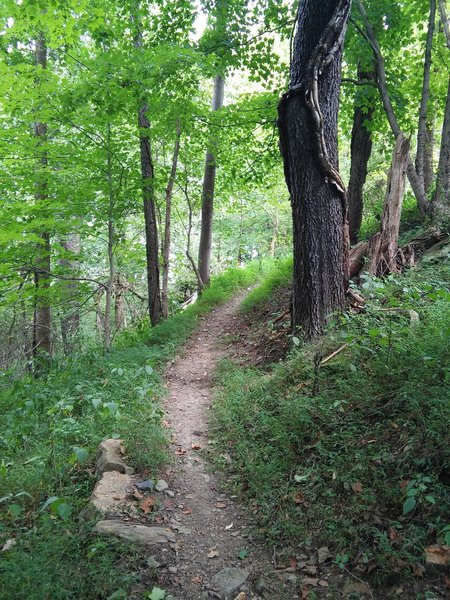 A lusher part of Delaney Trail at Bridgeport Park