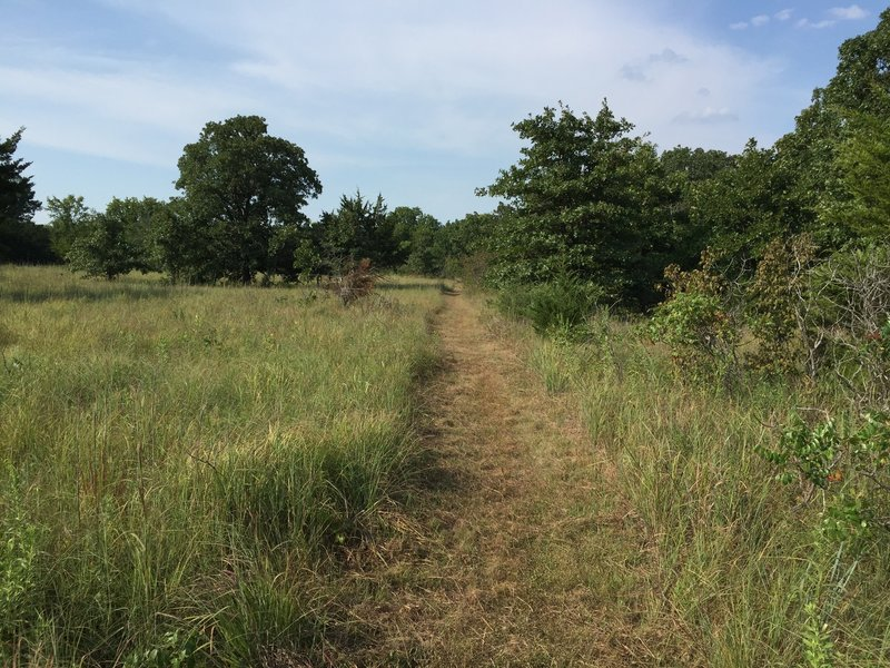 This trail is a mix of in the trees with rocks and out in the open mowed trail