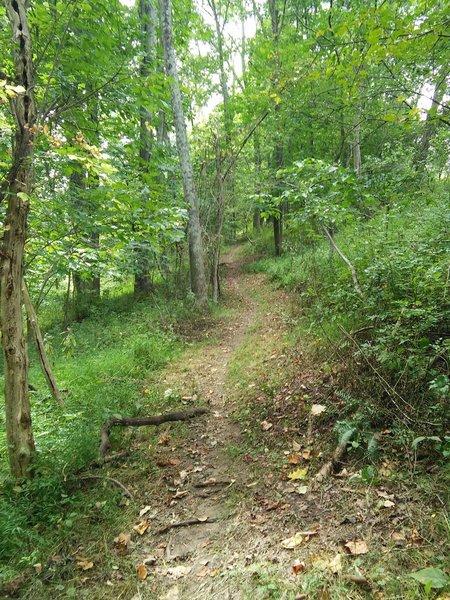 Delaney Trail at Bridgeport Park