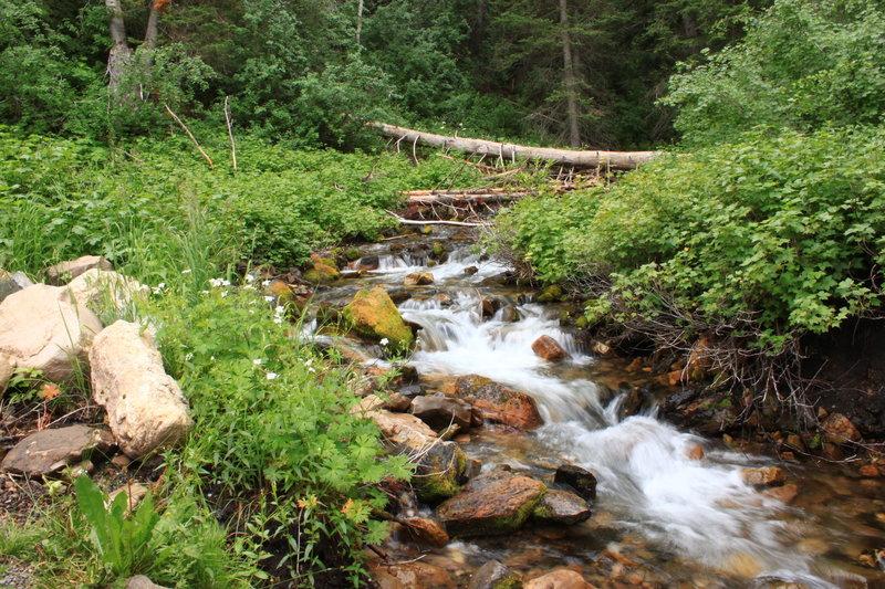 Beautiful creek!