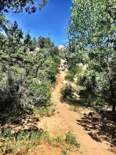 Typical Trail #349