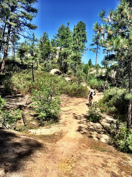 Rolling along Trail #349