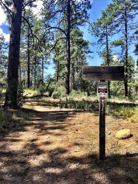 Start of Trail #349