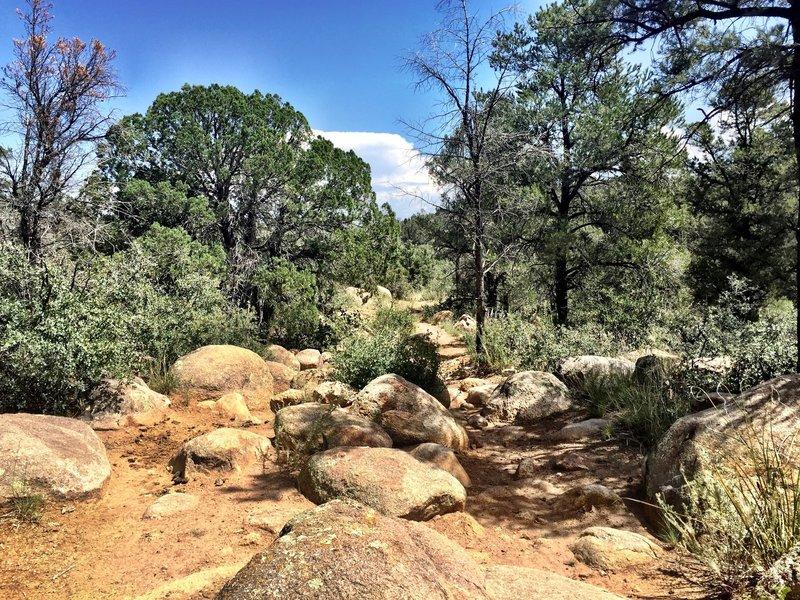 A boulder field along Trail #345
