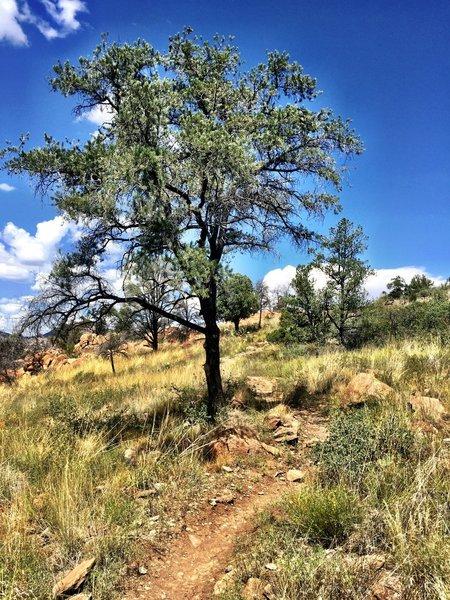 Rocky Trail #345