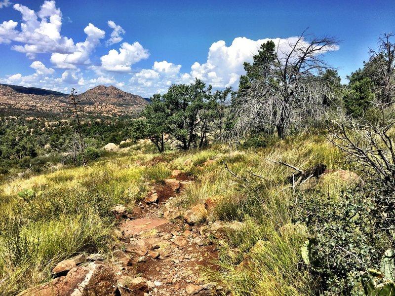 Riding through sage on Trail #345