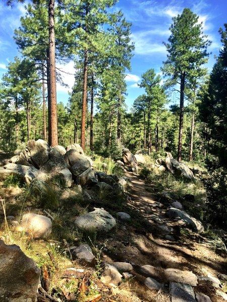 Many boulders along Trail #324
