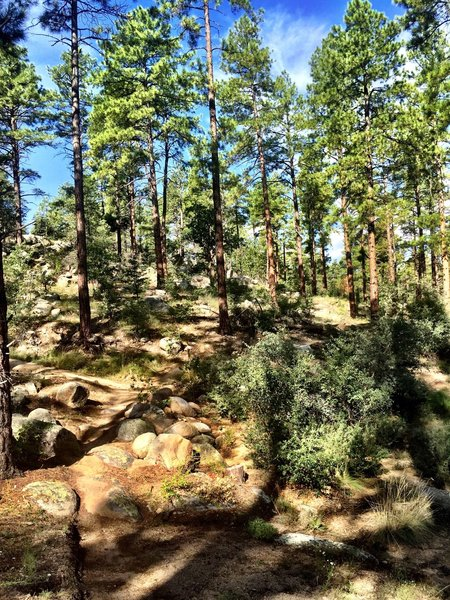 Typical scenery on Trail #324