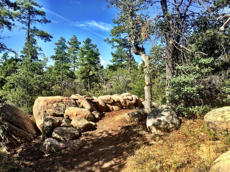B Line on Trail #324