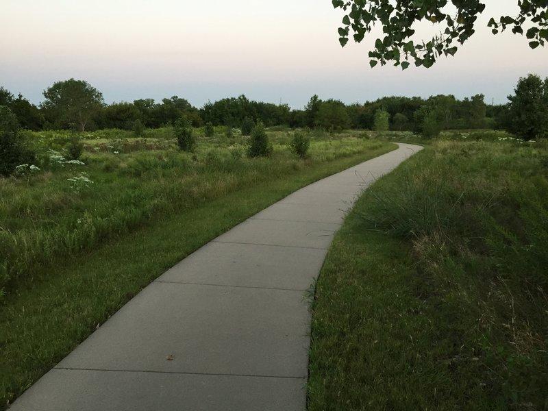 This meadow is full of deer!