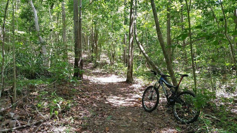 Singletrack in the forest.