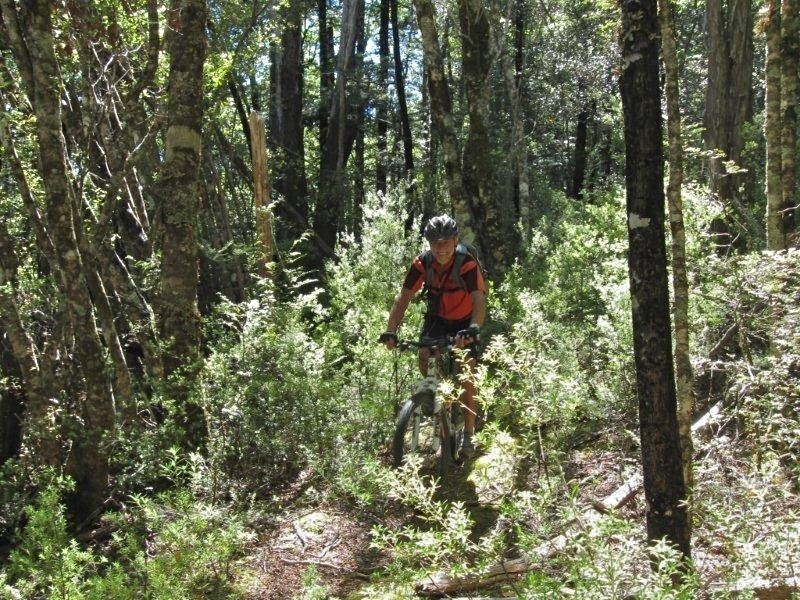 The track has been cleared since this photo was taken near Waingaro Forks