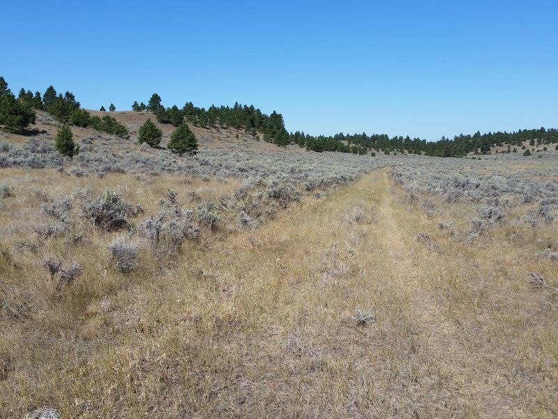 The trail can be hard to lose at times since it's not heavily used.