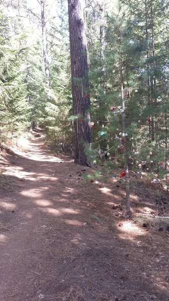 Christmas comes early this August at Boggs Mt. Catch a little holiday cheer on Hoberg's Loop Trail!