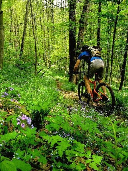 """Descending """"V-Brake Hill"""" on the Archer's Fork Loop Trail in the spring wildflowers."""
