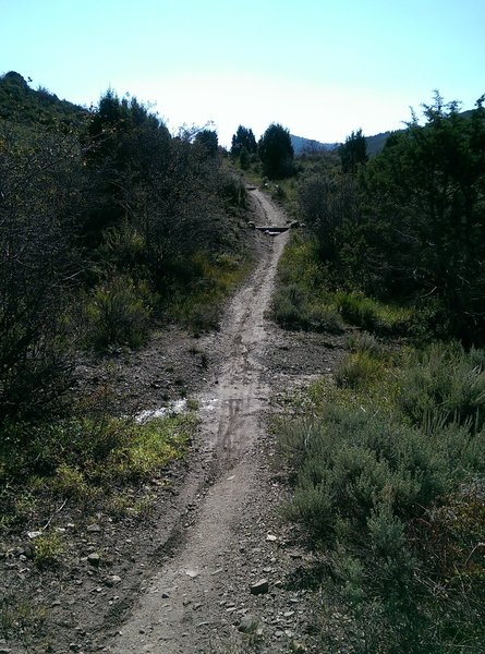 This gully can be tricky to cross during a large storm runoff