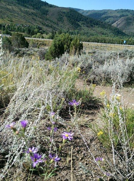 Near the bottom of Saddle Ridge Trail