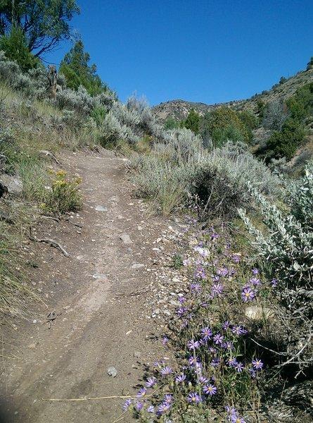 Some late season wildflowers along the ASC