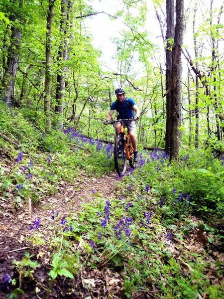 Spring flowers along the switchbacks on the Scenic River Trail!