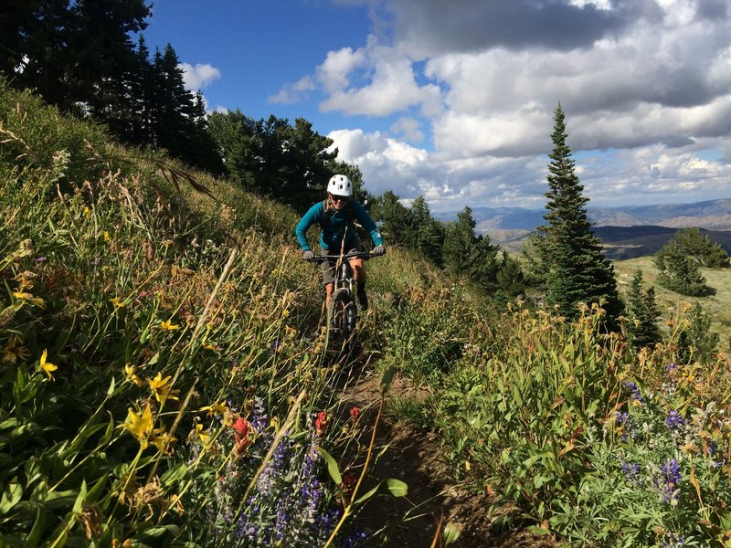Wildflowers galore to distract you from the grinding climb.