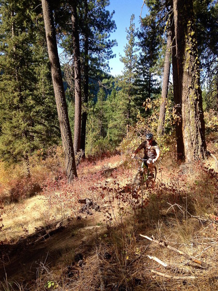 Rolling fast on Tesemini Trail