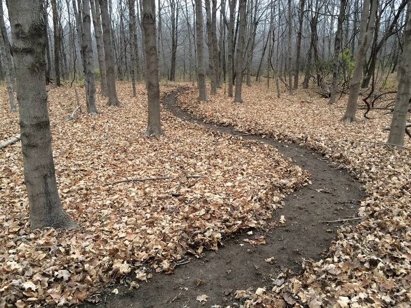 """Trail winding through the """"Maple Grove"""" - one of the interesting areas along the trail."""