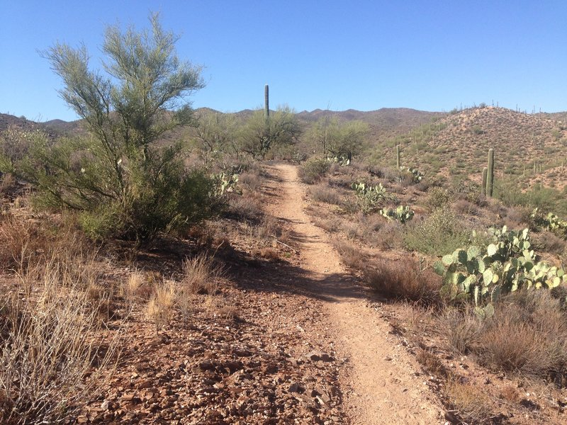 This photo is was taken at about the 1 mile mark, nice trail.