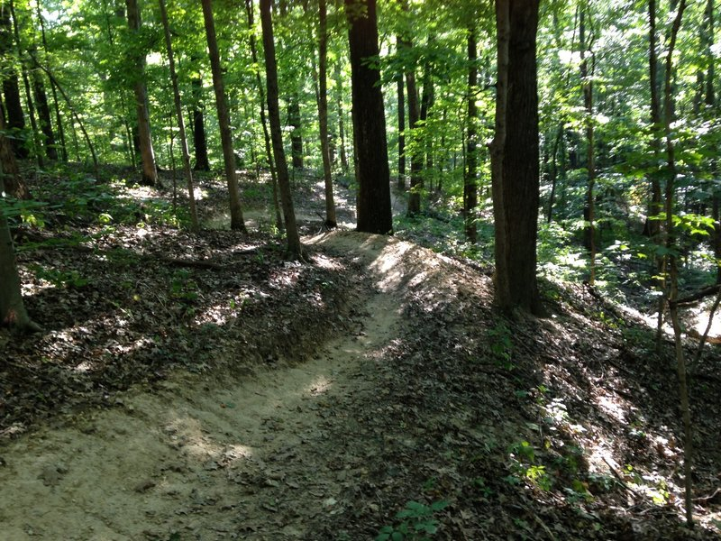 Another picture of the flowing section of the black trail when riding it counter clockwise.