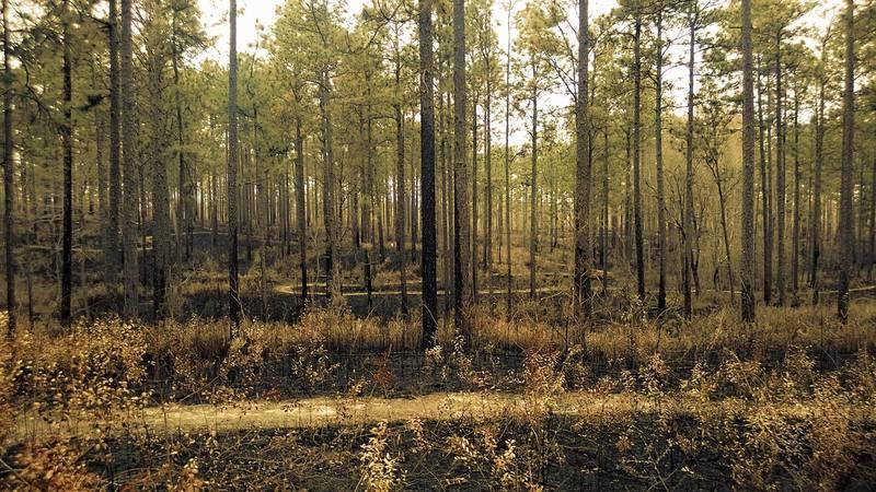 Turtle trails after a seasonal burn