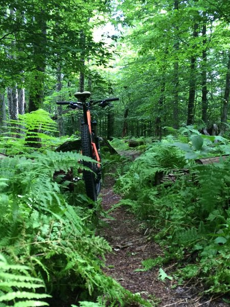 Sweet section of singletrack